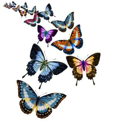 Nálepka Motýl