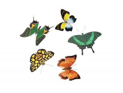 Nálepka motýl designu