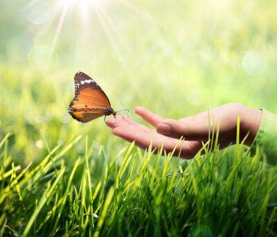 Nálepka motýl v ruce na trávě