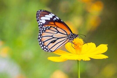 Nálepka Motýli a květiny