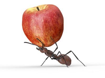 Nálepka mravenec zvedání jablko na bílém