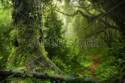 Nálepka Nepal jungle