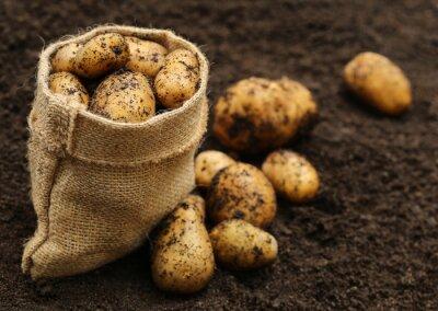 Nálepka Nově sklizené brambory