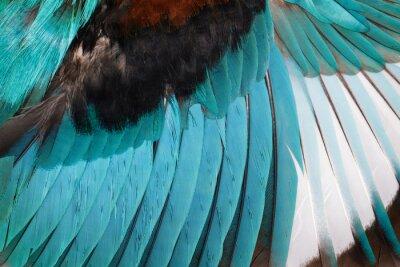 Nálepka Obrázek křídla ledňáčka bílého throated na bílém pozadí. Pták. Zvíře.