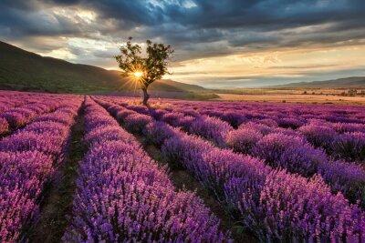 Nálepka Ohromující krajina s levandulí pole při východu slunce