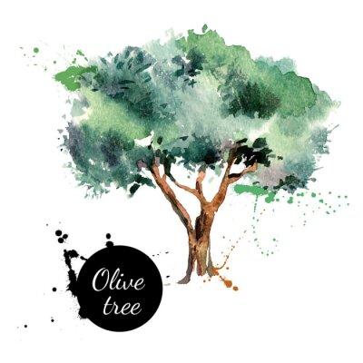 Nálepka Olivový strom vektorové ilustrace. Ručně malovaná akvarel