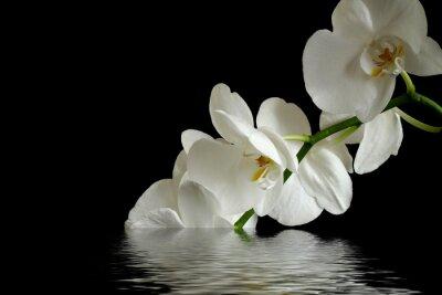 Nálepka orchid flower reflexion