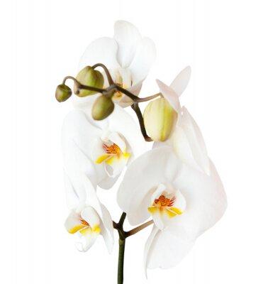 Nálepka orchidej, izolovaných na bílém pozadí
