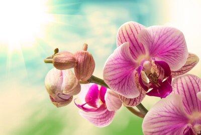 Nálepka Orchidej květina zblízka