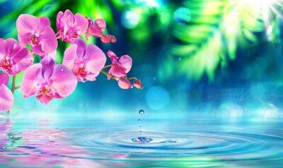 Nálepka orchidej v zen zahradě s kapička na rybníku