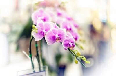 Nálepka orchideje