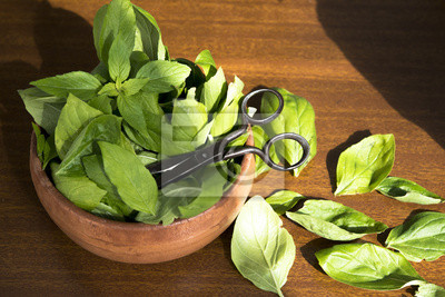 Nálepka Organic Basil