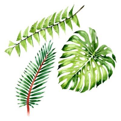 Nálepka Palm beach tree leaves jungle botanical. Watercolor background illustration set. Isolated leaf illustration element.
