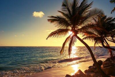 Nálepka Palma na tropické pláži