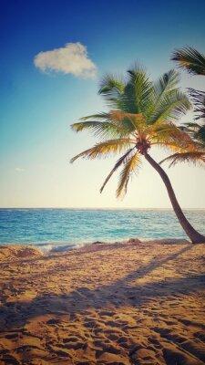 Nálepka Palma na tropickém ostrově