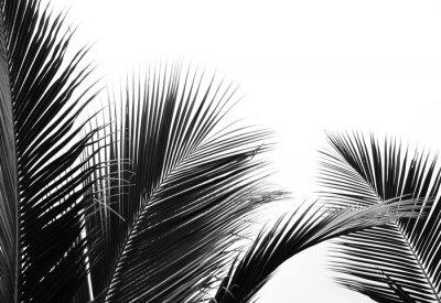 Nálepka palms leaf on white background