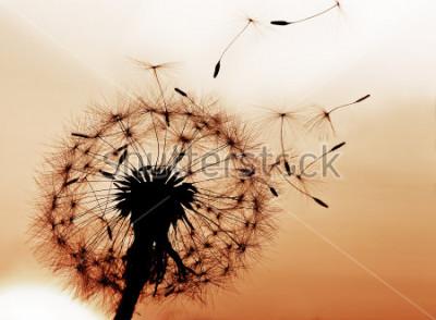Nálepka Pampeliška fouká semena ve větru.