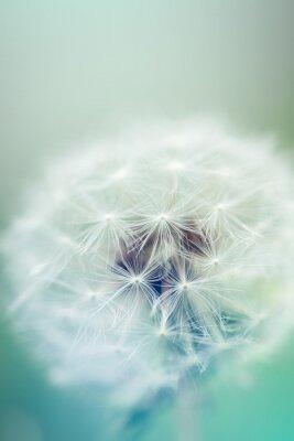 Nálepka Pampeliška semena