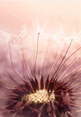Nálepka Pampeliška semeno na slunečním světle - Abstraktní