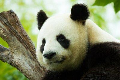 Nálepka Panda spí