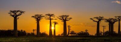 Nálepka Panorama view at sunset above Baobab avenue