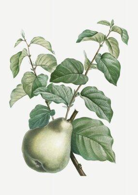 Nálepka Pear on a branch