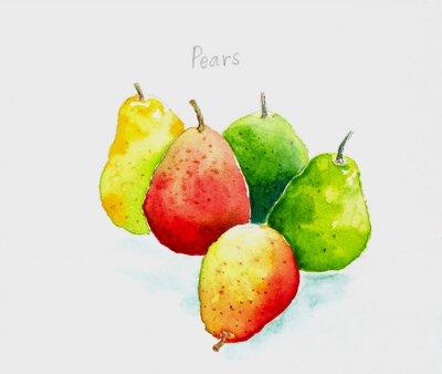 Nálepka pears'watercolor malované