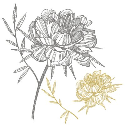 Nálepka Peony flower and leaves drawing. Hand drawn engraved floral set. Botanical illustrations. Great for tattoo, invitations, greeting cards