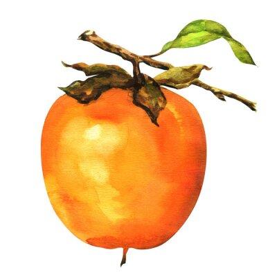 Nálepka persimmons na větvi izolované