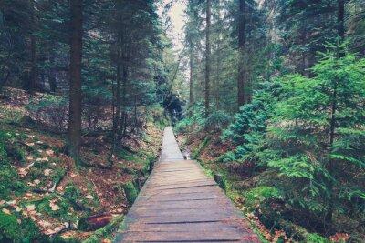 Nálepka pěší cestu uvnitř lesní krajiny