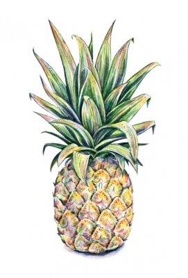 Nálepka Pineapple on a white background. Watercolor illustration