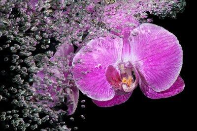 Nálepka Pink tropických orchidejí pod vodou