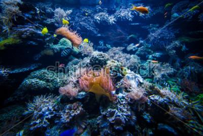 Nálepka podvodní korálový útes krajina s barevnými rybami