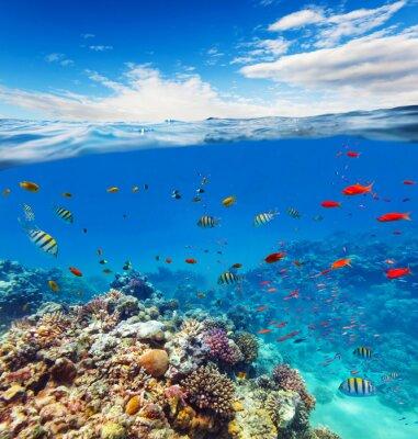 Nálepka Podvodní korálový útes s horizontem a vodní vlny