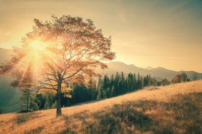 Nálepka Podzimní strom a sluneční paprsek horký den krajina v tónovaný vinobraní