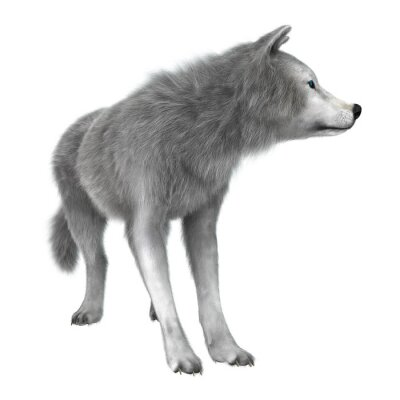 Nálepka Polární vlk na White