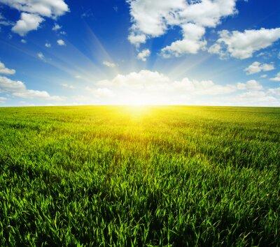 Nálepka pole a slunce