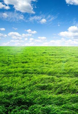 Nálepka pole trávy a perfektní nebe