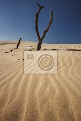 Polští duny
