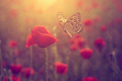 Nálepka Poppy a motýl