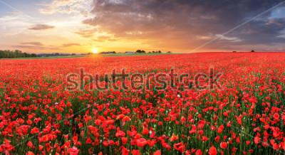 Nálepka Poppy flowers meadow and nice sunset scene