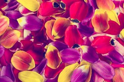 Nálepka Pozadí lístků tulipánů