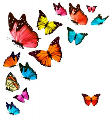 Nálepka Pozadí s barevnými motýly. Vector.
