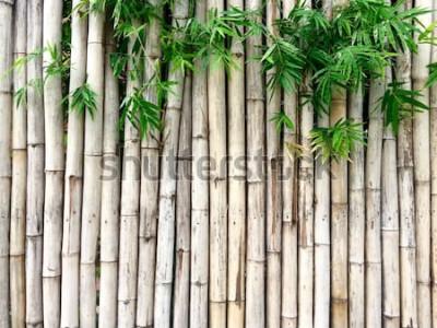Nálepka Přírodní bambusové pozadí