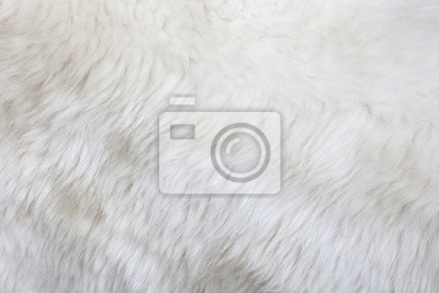 Pro Texture./Fur Textura