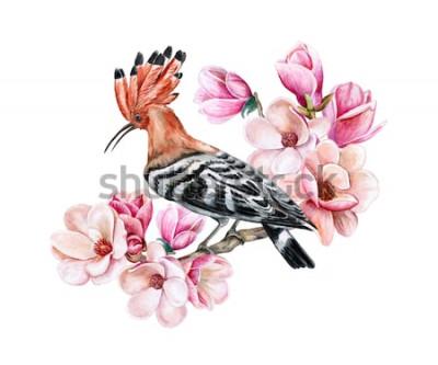 Nálepka Ptačí hoopoe sedí na kvetoucí jarní větve. Květy magnólie. Vodové barvy. Ilustrace. Šablona. Clip Art. Close-up. Karta