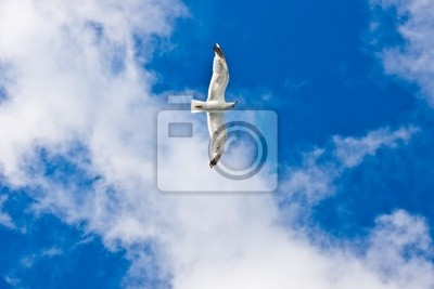 Racek v nebi