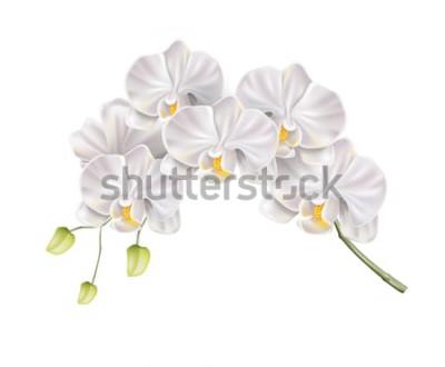 Nálepka Realistické bílá orchidej květina větev s pupeny na stonku. Elegantní svatební oznámení, lázeňský salon dekorace design. Vektorové svatební oznámení, prvek romantické události. Jaro, letní prázdniny f