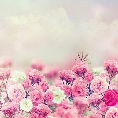 Nálepka Rose Flowers