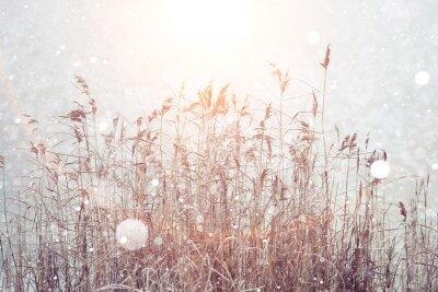 Nálepka rozmazané zimní pozadí, suchá tráva sněhové vločky